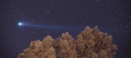 Комета Хиякутаке и дерево